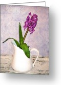  Flowers Photographs Greeting Cards -  Hyacinth Greeting Card by Kathy Jennings