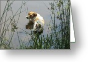 Funny Pet Picture Greeting Cards -  Just five more minutes Greeting Card by Ginger Wemett