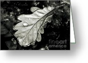 Rait Greeting Cards -  Leaf Greeting Card by Odon Czintos