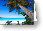 Shady Greeting Cards -  Leaning Palm Tree on a Tropical Beach Greeting Card by George Oze