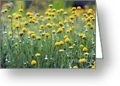 Patty Malajak Greeting Cards -  Little yellow flowers Greeting Card by Patty Malajak