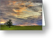 Horizon Over Land Greeting Cards - Lonley Tree Greeting Card by Matt Champlin