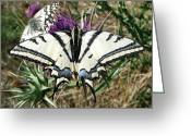 Mediterranean Butterfly Greeting Cards -  Love Is Blind Greeting Card by Eric Kempson