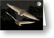 Eftalou Greeting Cards -  Majestic Great Egrets  Greeting Card by Eric Kempson
