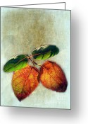 Reminiscing Greeting Cards -  Memory of Leaves Greeting Card by Judi Bagwell