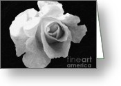 Bw Pyrography Greeting Cards -  My Forgotten ROSE Greeting Card by AHcreatrix
