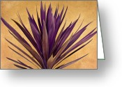 New Mexico Greeting Cards -  Purple Giant Dracaena Santa Fe Greeting Card by John Hansen