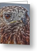 Power Lines Framed Prints Greeting Cards -  Raptor Retina  Greeting Card by Jerry Cordeiro