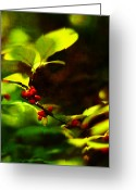 Spicebush Greeting Cards -  Spicebush with Red Berries Greeting Card by Rebecca Sherman