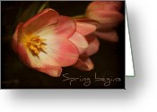 Tulips Greeting Cards -  Spring begins Greeting Card by Cathie Tyler