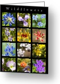 Texas Wildflowers Greeting Cards -  Spring Wildflowers Greeting Card by Stephen Anderson