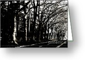 Winter Trees Greeting Cards -  Trees on a Country road Greeting Card by ArtyZen Studios