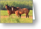 Green Pasture Greeting Cards -  Two Horses Watching Greeting Card by Elizabeth Budd