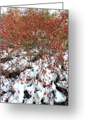 Rose Bushes Greeting Cards -  Winter Harvest 2 Greeting Card by Will Borden