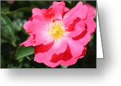 Beauty Mark Greeting Cards - 06182012 012 Greeting Card by Mark J Seefeldt