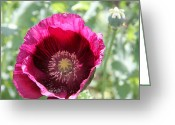 Beauty Mark Greeting Cards - 06182012 056 Greeting Card by Mark J Seefeldt