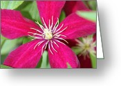 Beauty Mark Greeting Cards - 06182012 074 Greeting Card by Mark J Seefeldt