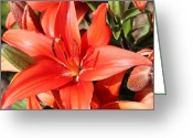 Beauty Mark Greeting Cards - 06182012 077 Greeting Card by Mark J Seefeldt