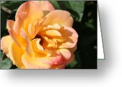 Beauty Mark Greeting Cards - 06182012 083 Greeting Card by Mark J Seefeldt