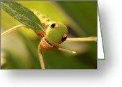 Spicebush Greeting Cards - A Caterpillar Of The Spicebush Greeting Card by Darlyne A. Murawski