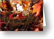 Maple Photographs Greeting Cards - A Clutch of Color Greeting Card by Jason Politte