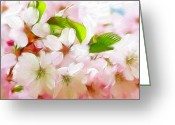 Flower Blossom Pastels Greeting Cards - A day in spring Greeting Card by Stefan Kuhn