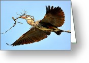 Blue Heron Photo Greeting Cards - A Heavy Load Greeting Card by Fraida Gutovich