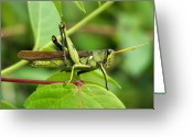 Green Grass Hopper Greeting Cards - A Hopper Greeting Card by Karen M Scovill