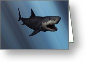 Animal Themes Digital Art Greeting Cards - A Megalodon Shark From The Cenozoic Era Greeting Card by Mark Stevenson