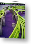 Missouri Photographer Greeting Cards - A Study in Purple and Green Greeting Card by Jane Linders