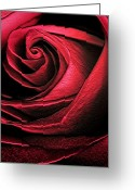 Red Lines Greeting Cards - Abstract Rose Greeting Card by Marilyn Hunt