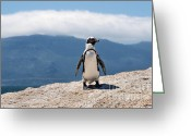 Ass Greeting Cards - African Penguin Greeting Card by Fabrizio Troiani