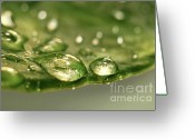 Growing Water Greeting Cards - After the rain Greeting Card by Sandra Cunningham