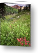 Mountainous Greeting Cards - Albion Basin Wildflowers Greeting Card by Utah Images