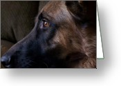 Purebreed Greeting Cards - Alert - German Shepherd Dog Greeting Card by Angie McKenzie