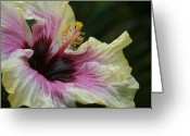 Impressions Greeting Cards - Aloha Aloalo Tropical Hibiscus Haiku Maui Hawaii Greeting Card by Sharon Mau