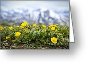 Rocky Mountains Greeting Cards - Alpine meadow in Jasper National Park Greeting Card by Elena Elisseeva
