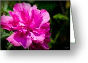 Althea Greeting Cards - Althea Blossom Greeting Card by Barry Jones