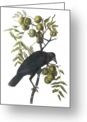 Lithograph Greeting Cards - American Crow Greeting Card by John James Audubon