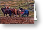 Plowing Greeting Cards - Amish Farming Greeting Card by Tommy Anderson