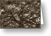 Carolina Greeting Cards - Angel Oak Live Oak Tree Greeting Card by Dustin K Ryan