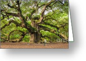 Oak Tree Greeting Cards - Angel Oak Tree of Life Greeting Card by Dustin K Ryan