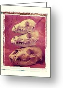 Fox Greeting Cards - Animal Skulls Greeting Card by Garry Gay