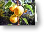 Apricots Photo Greeting Cards - Apricots in the Garden Greeting Card by Irina Sztukowski