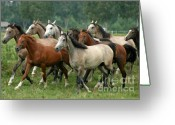 Gallop Greeting Cards - Arabian Horses Greeting Card by Angel  Tarantella