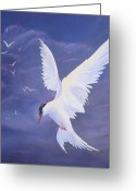 Tern Greeting Cards - Arctic Tern Greeting Card by Kathleen Tucker