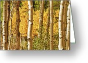 Autumn Photographs Greeting Cards - Aspen Gold Greeting Card by James Bo Insogna