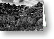 Tuolumne Greeting Cards - Aspen Trees Sonora Pass Tuolumne County CA Greeting Card by Troy Montemayor