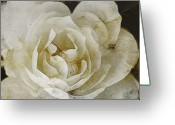 Altered Photograph Greeting Cards - Aunt Loris White Rose Greeting Card by Danielle Miller