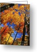 Shine Greeting Cards - Autumn forest Greeting Card by Elena Elisseeva